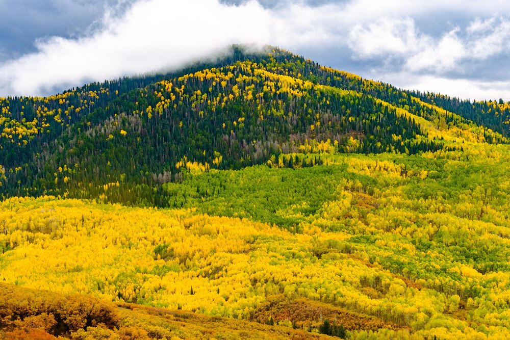 Fall Colors along Owl Creek Pass in the Uncompahgre National Forest - Fuji XT2, XF 50-140mm f/2.8 @ 54.1mm