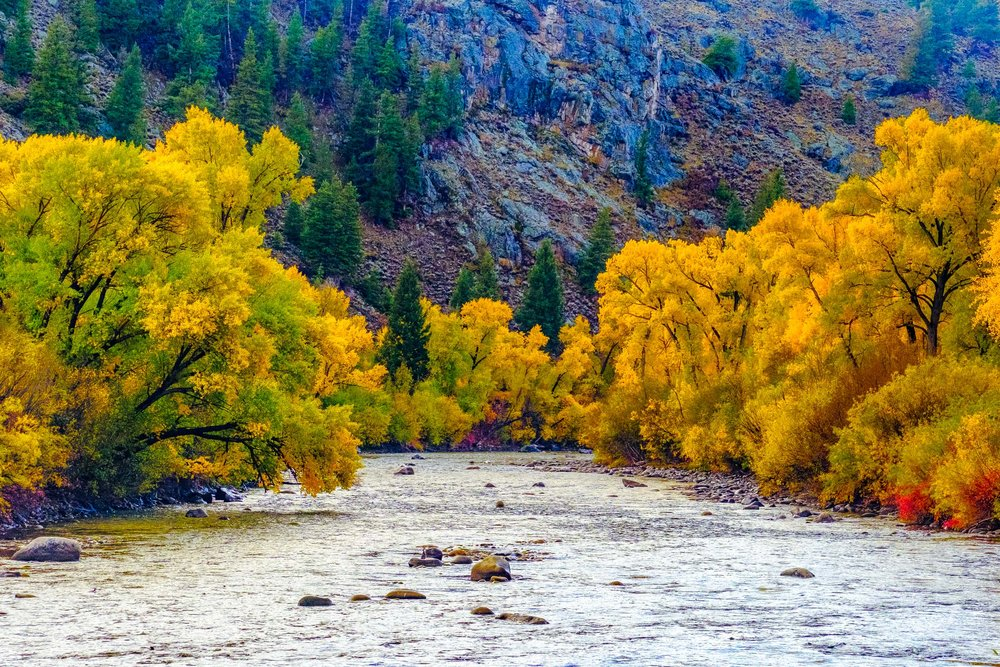 Fall colors along the Gunnison River - Fuji XT2, XF 50-140mm f/2.8 @ 80.4mm