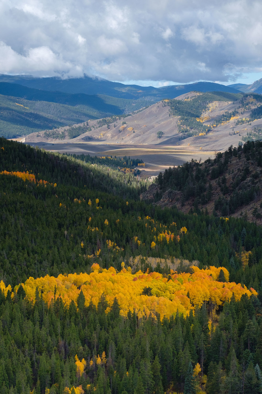 A Patch of aspens along the valley below Monarch Pass- Fuji XT2, XF 50-140mm f/2.8 @ 54.1mm