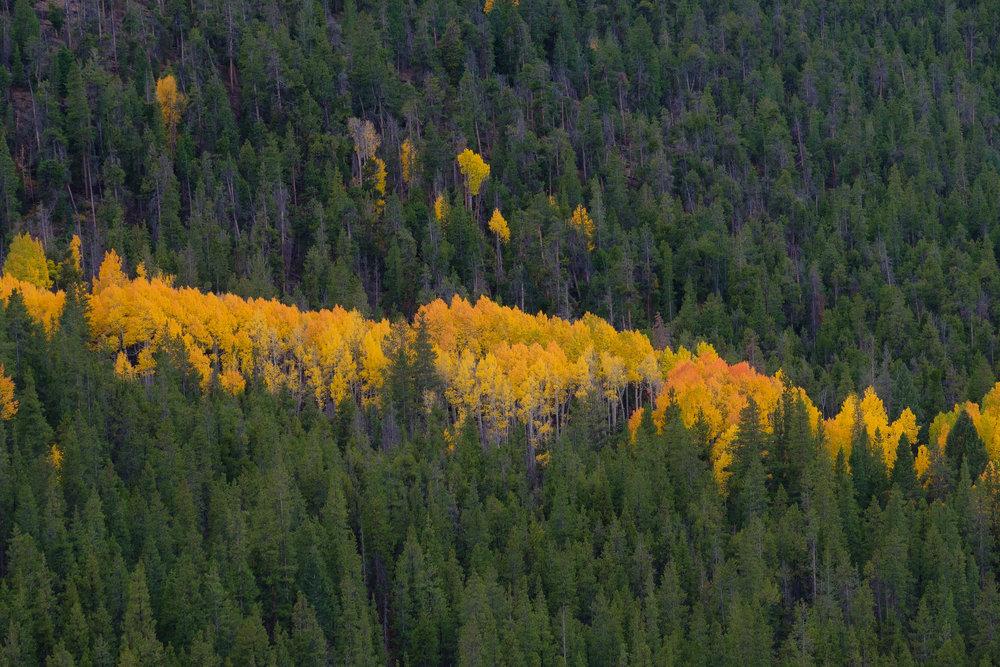 A Streak of aspen color along Monarch Pass - Fuji XT2, XF 50-140mm f/2.8 @ 110.6mm