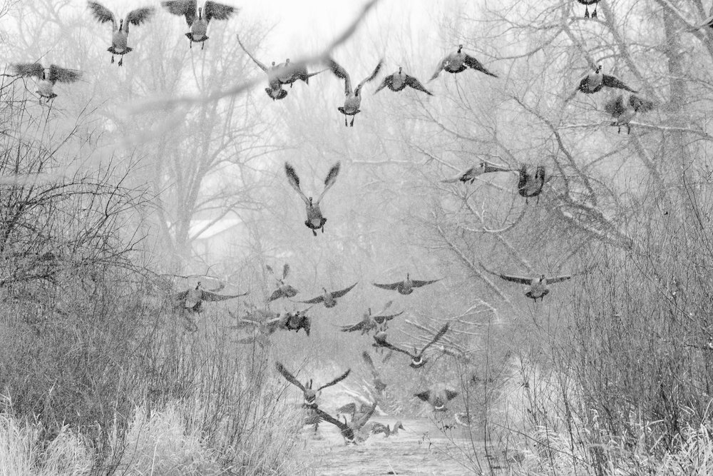 Flying Geese-1.jpg
