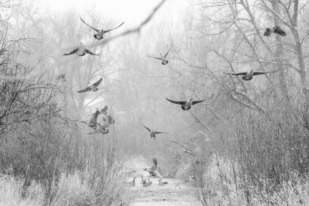 Flying Geese-2.jpg