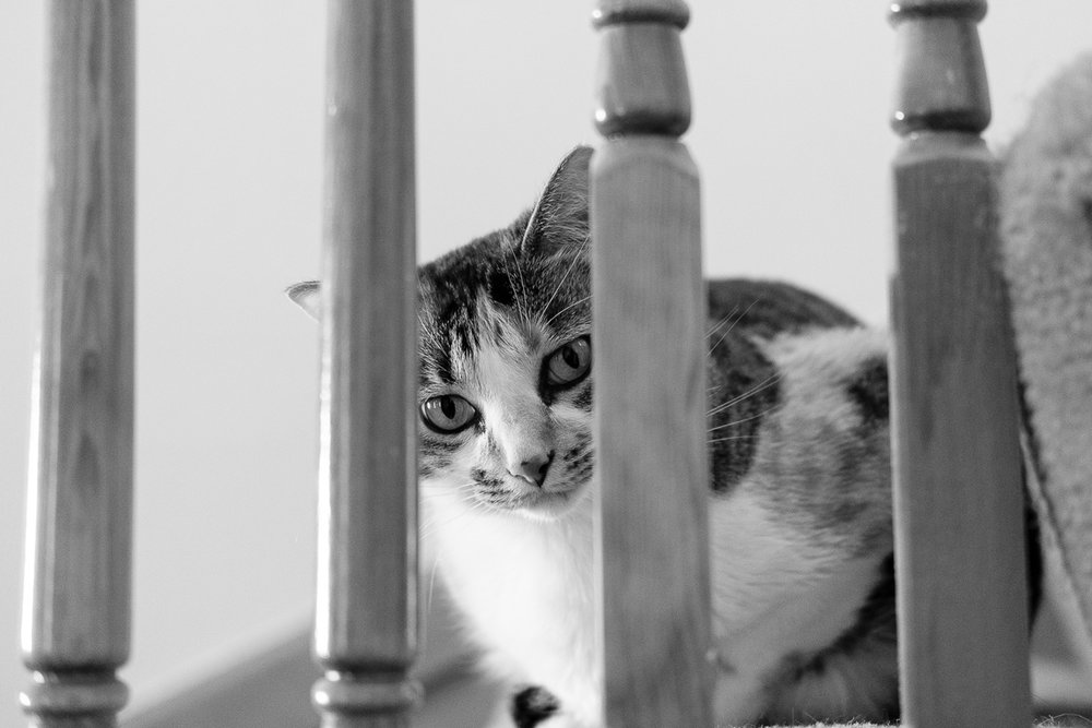 365 Day Black and White Challenge - Day 4 - Gigi - Fuji XT-2, XF 35mm f/2