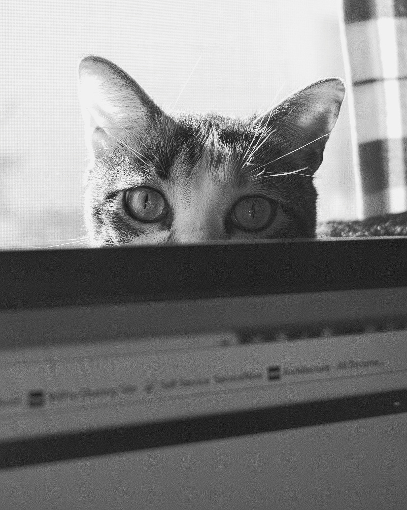 Day 63- 365 Day B&W Photo Challenge - Gigi playing peekaboo over my computer monitor - Fuji XT23 XF 35mm f/2, Acros R Film Simulation