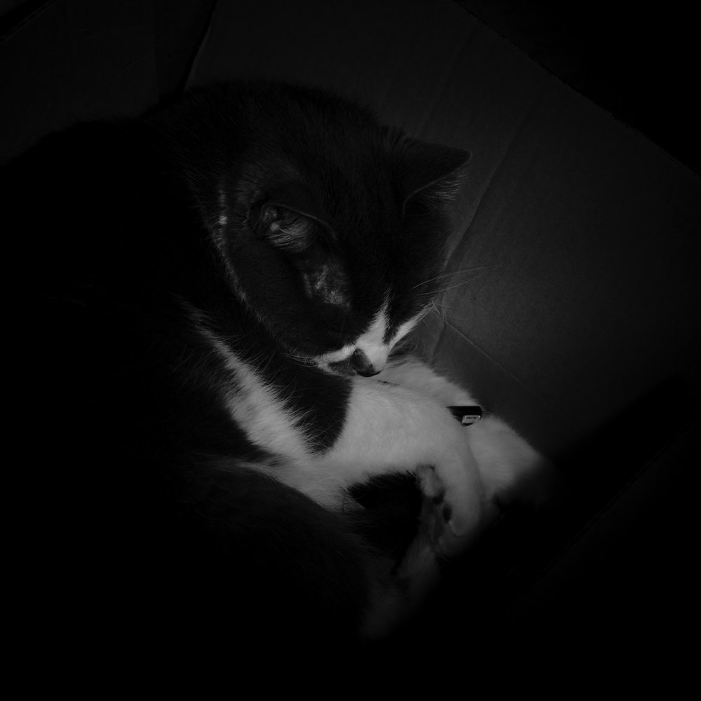 Day 66- 365 Day B&W Photo Challenge - I've been cleaning out my desk drawers and had this box full of miscellaneous items.  Zombie, my daughter's cat seems to think it's a great place to curl up and take a nap. I used my Godox AD200 flash with 2 Magmod grids and shot with TTL at -3.0 to highlight just the front over his face and paws. - Fuji XT35 XF 35mm f/2, Acros R Film Simulation