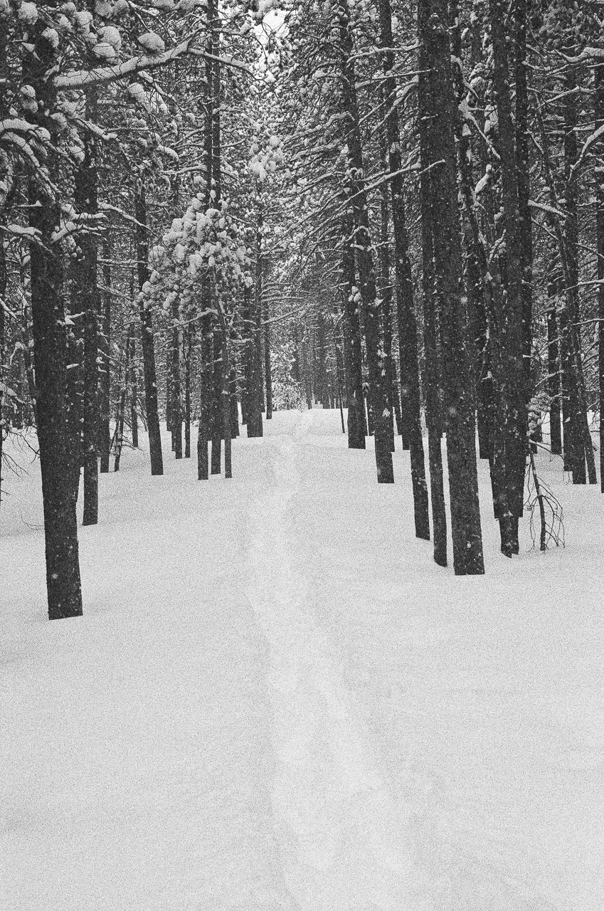 Fresh hiking tracks
