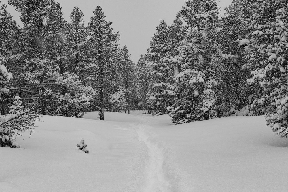 Trail through the deep snow