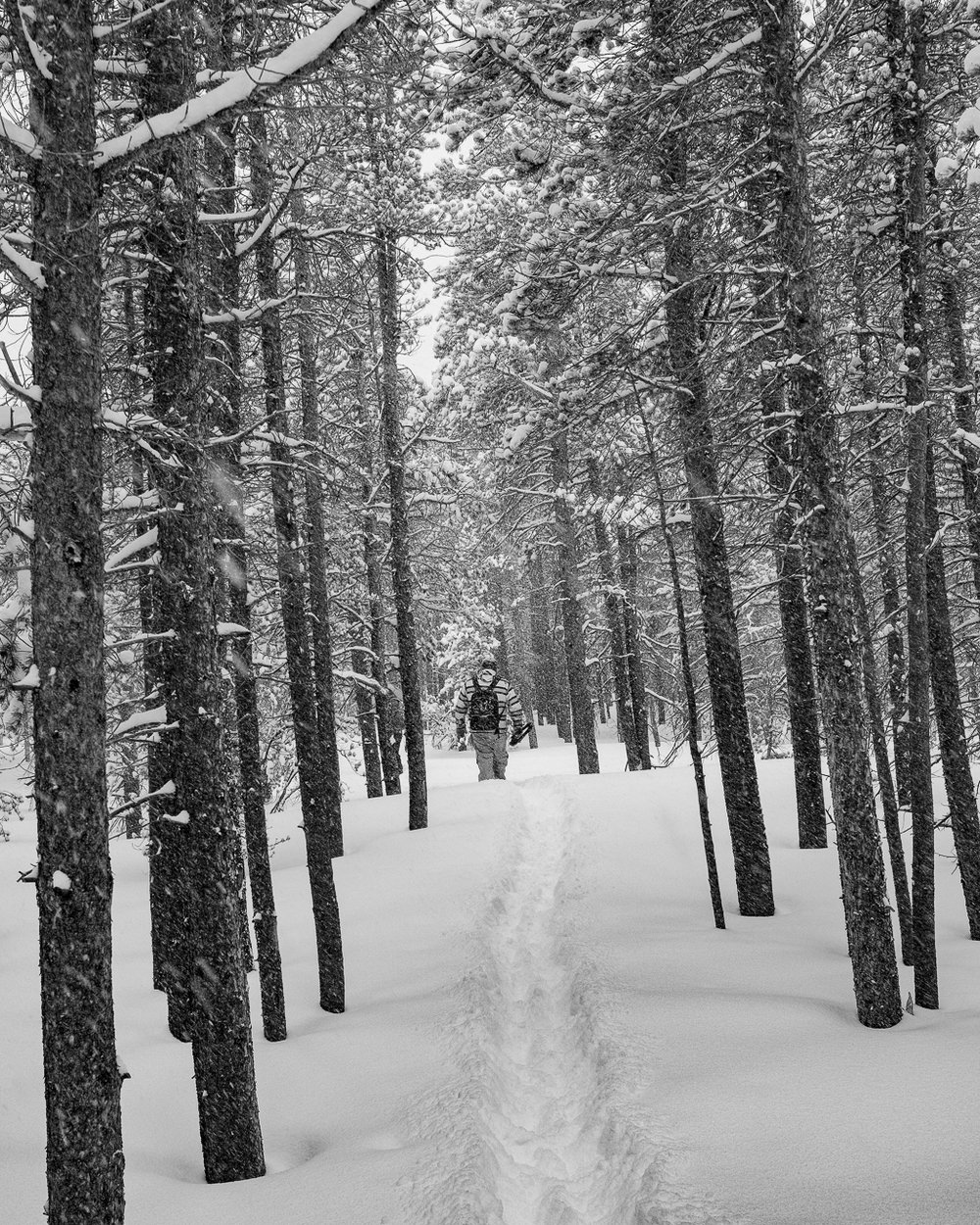 Forging through the snow