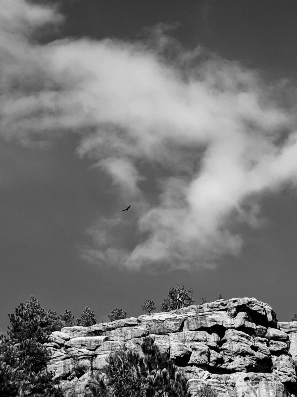 Day 125- 365 Day B&W Photo Challenge - Eagle soars high above Castlewood Canyon State Park. - Google Pixel 3, Moment 58mm Tele Lens, Lightroom CC B&W High Contrast
