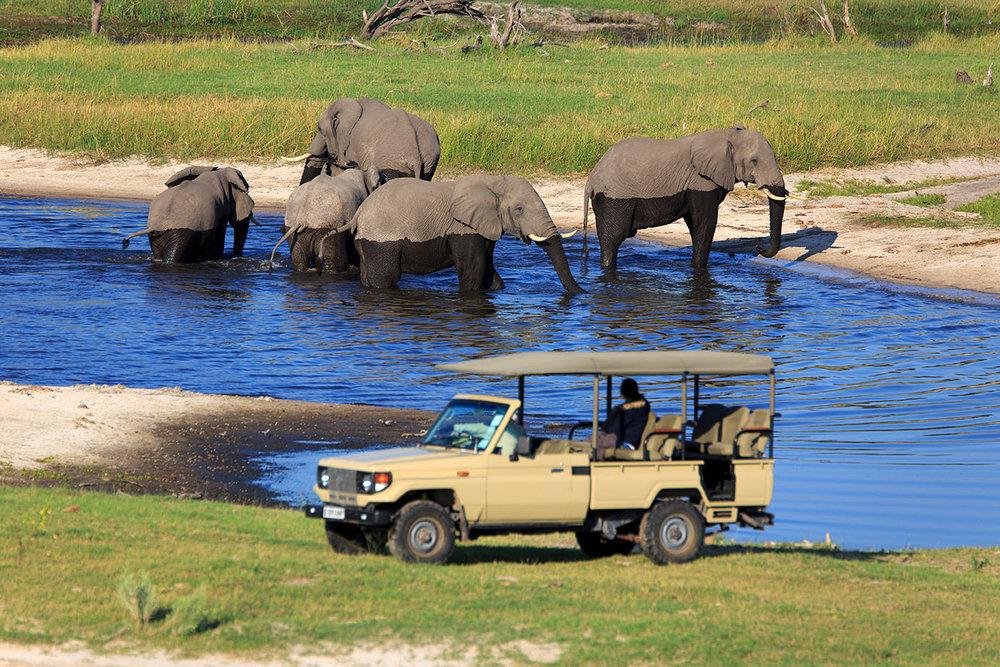 Safari -