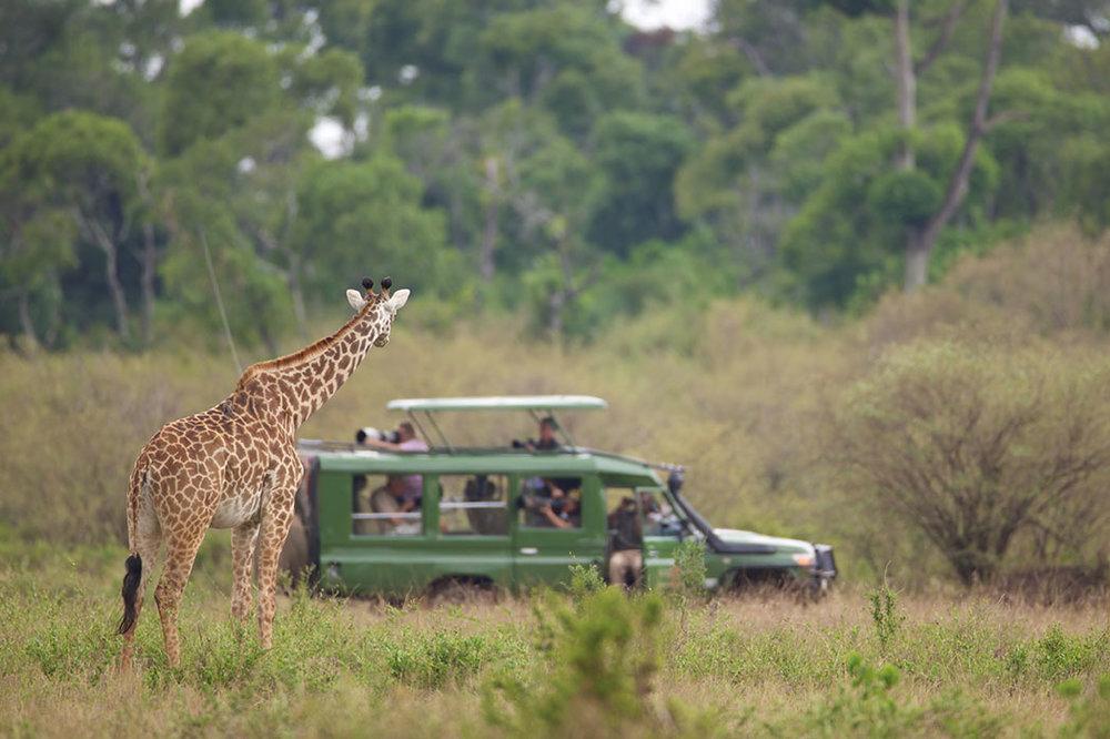 Luxury_Travel_Safari7.jpg
