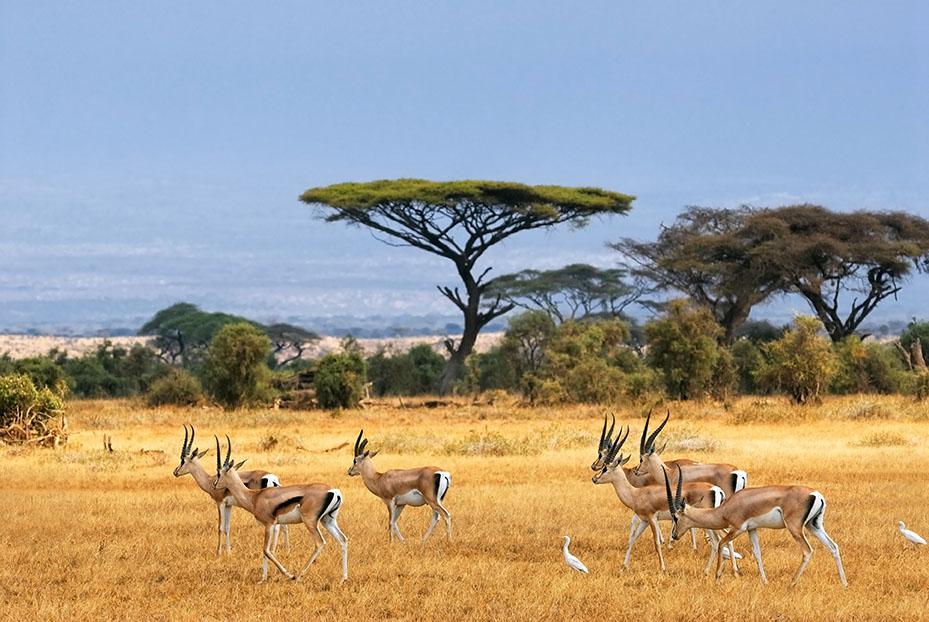 Safari_Adventure_Travel_2.jpg