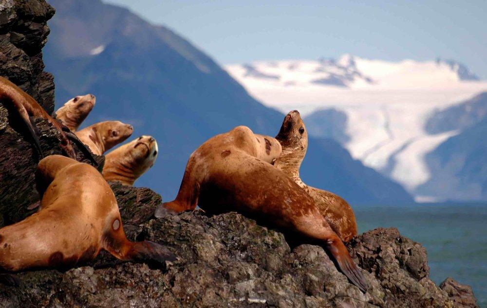 Experience Alaska!