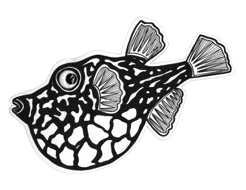 juliawald-googlyfish-14.jpg