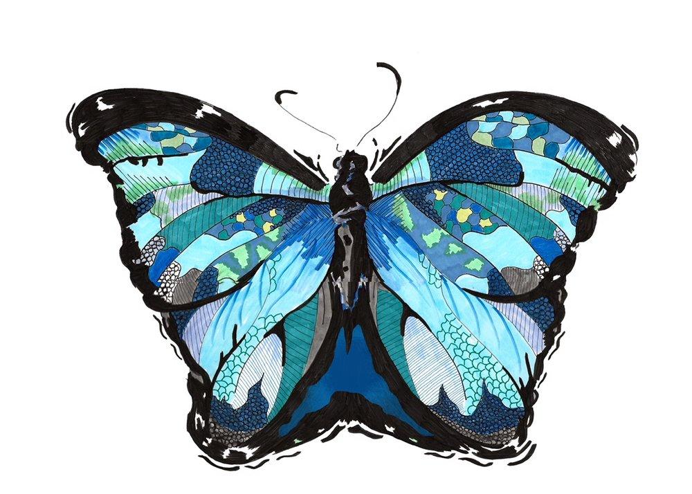 illumination_butterfly.jpeg