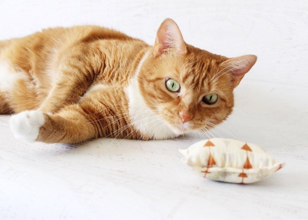 Silvervine cat toys by Playful Fox & Co.