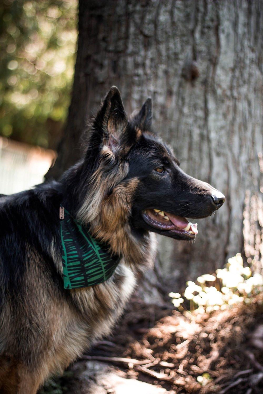 Pet collar bandanas by Playful Fox & Co.