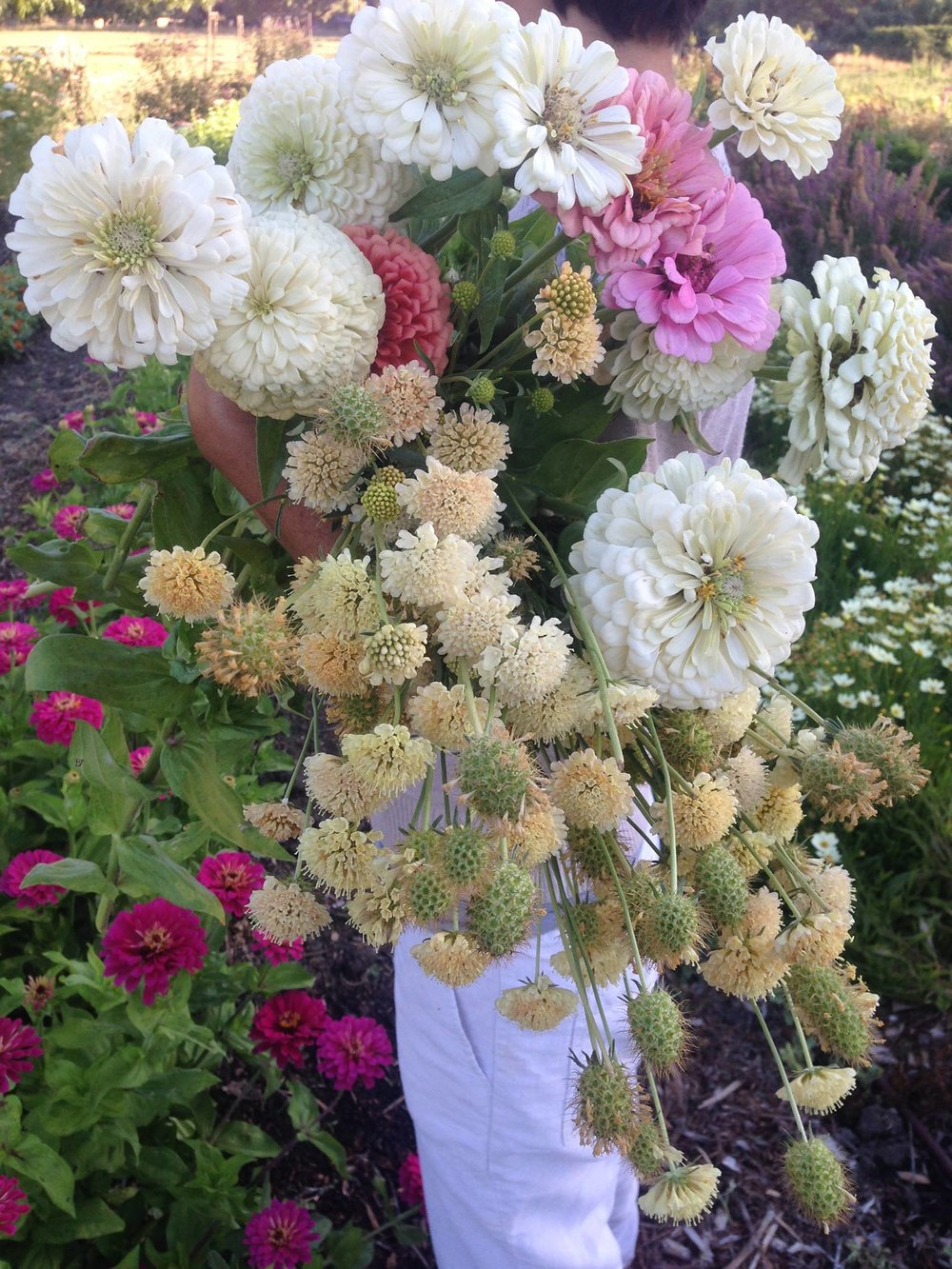 sff flowers 3.jpg