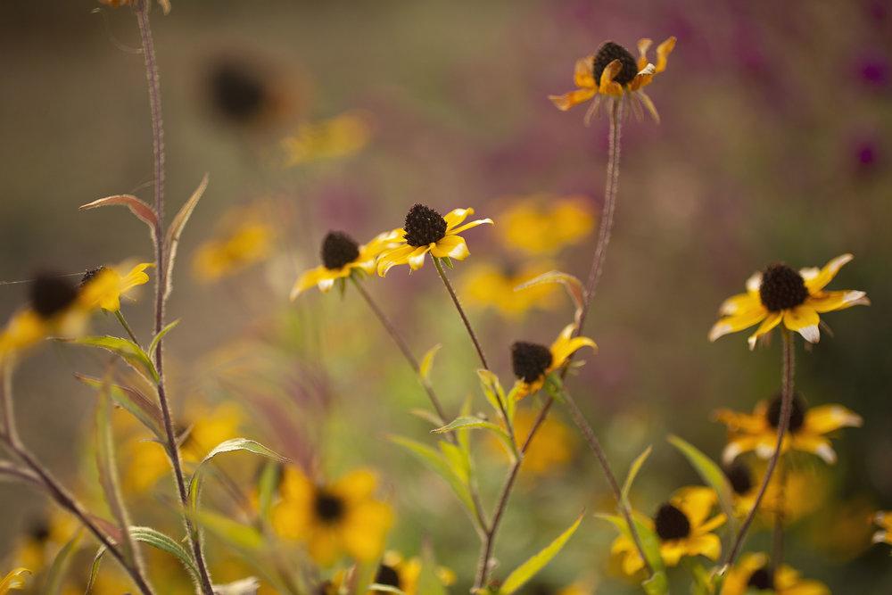 Flower Bucket Share -