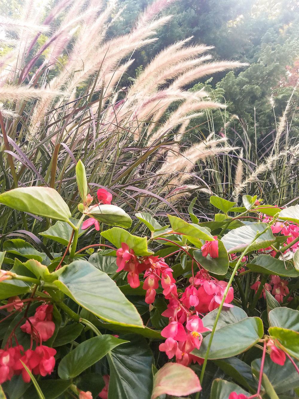 Grasses-red_flwrs.jpg