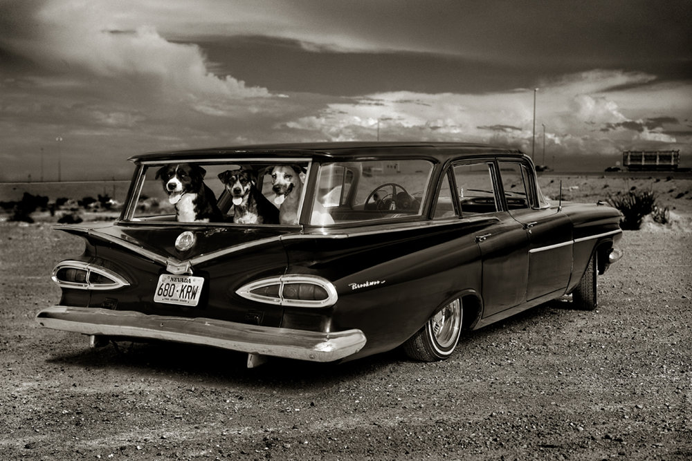 Dogs in Car, Las Vegas, 2000 by Albert Watson  Edition of 25,  Available in 3 sizes, archival pigment print.  Price on request