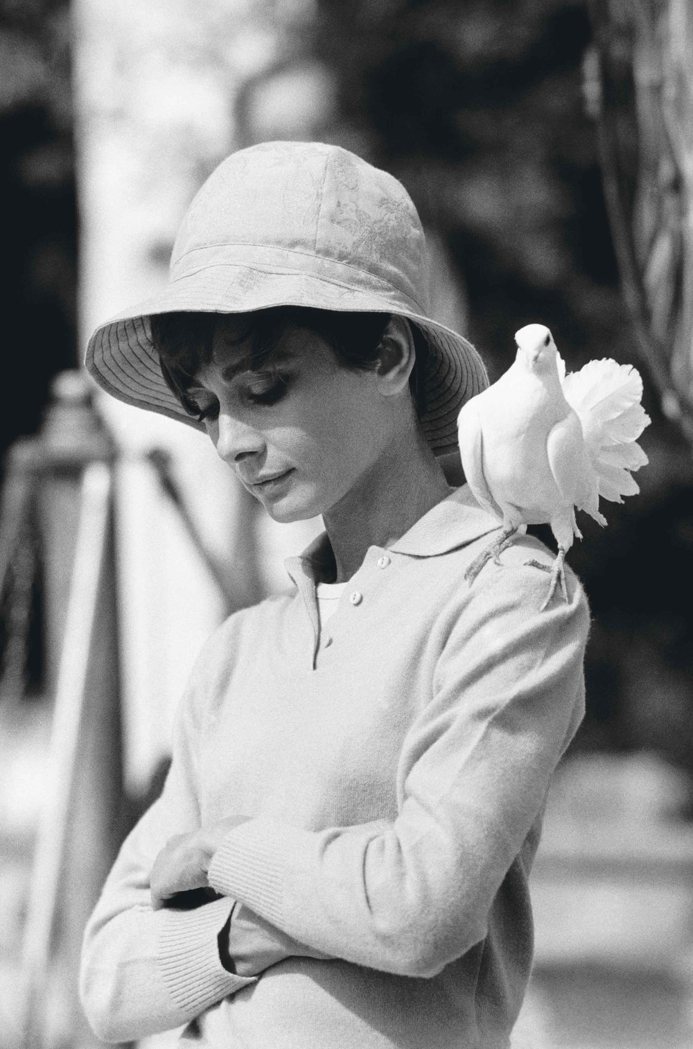 Audrey Hepburn with dove by Terry O`Neill  Ed 50, Silver gelatin  Available in several sizes  Price on request