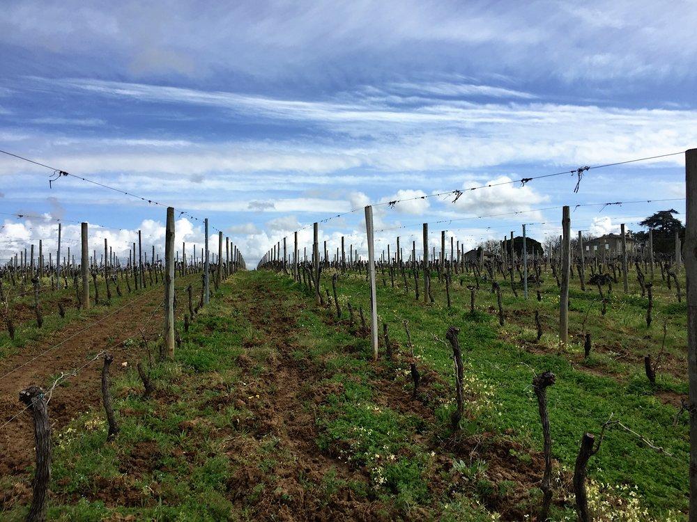 Vignes Domaine de l'île rouge Lugasson