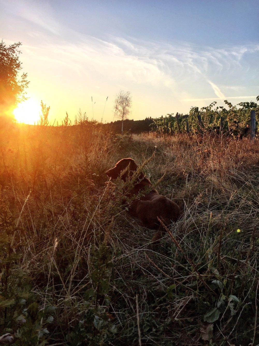 soleil se lève.jpg