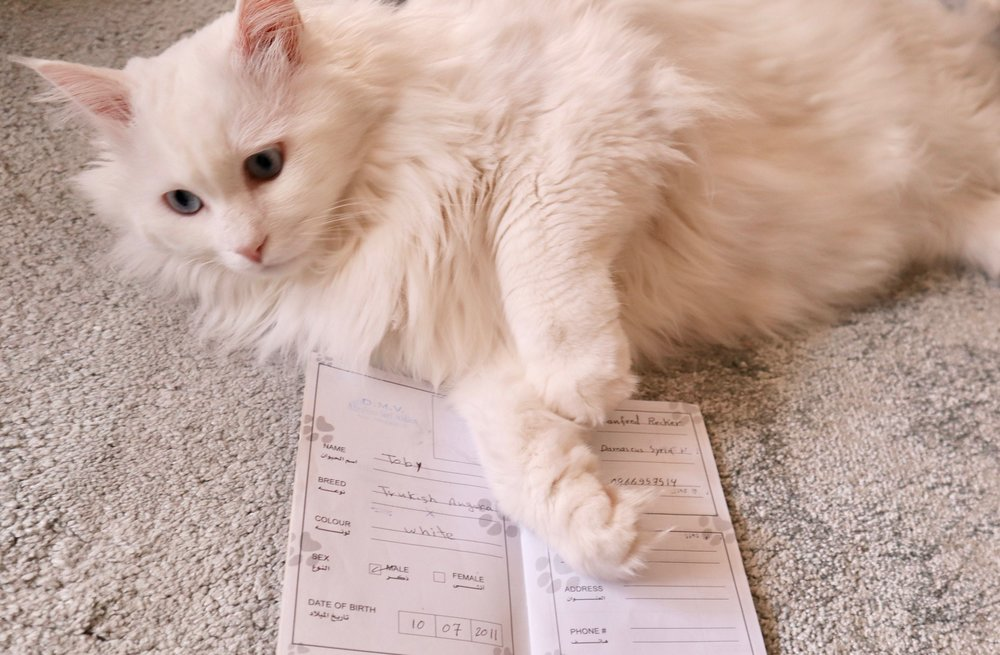 "Toby with his ""cat passport""."