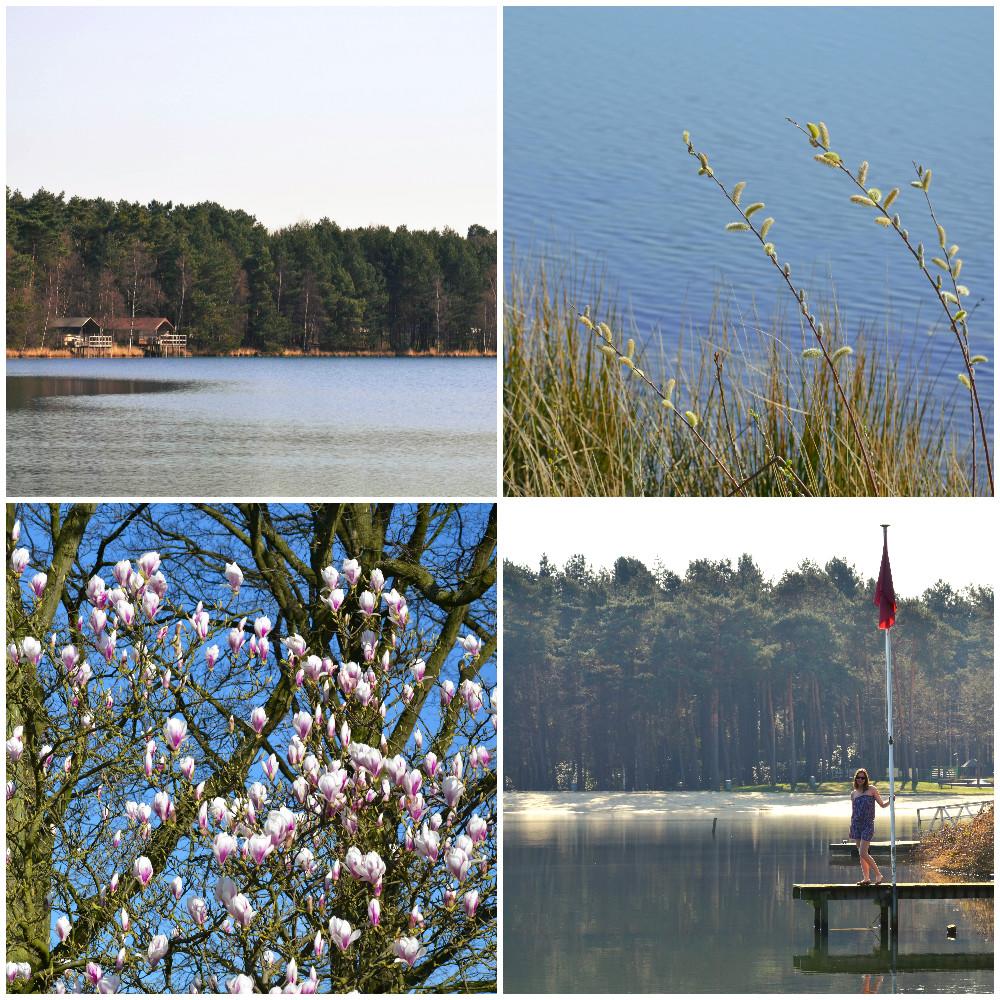 collage2.jpg.jpg