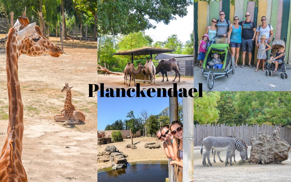 Een paar leuke fotootjes van een leuke dag in het dierenpark Planckendael!