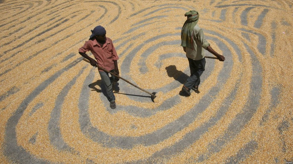 Study: India Could See Big Changes with Simple Shifts in Grains - Voice of America