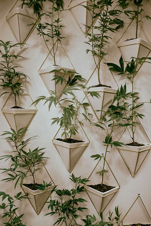 BeautyCon Booth display of hemp plants on wall inside triangular white & gold hanging flower vases.