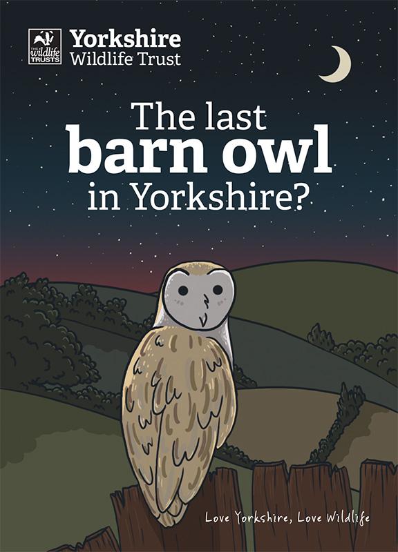 YWT Barn Owl1.jpg