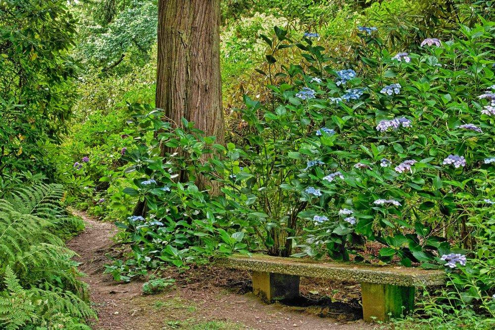 ParkBencharboretumHydrangeaPL149-17.jpg