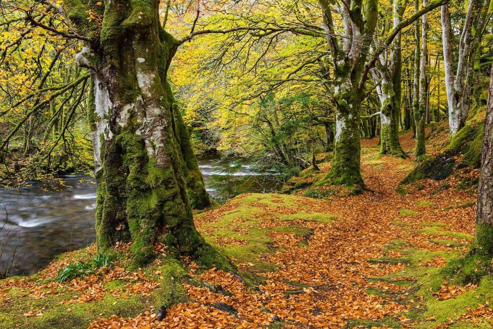 TheRiverCoe,ScotlandP51-17-3.jpg