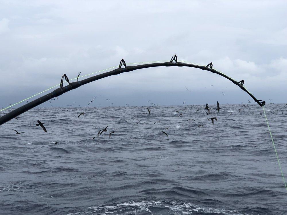 FISHING - Choose from Sport Fishing or Light Tackle Fishing charters, mornings and evenings. Seasonal catches include Spanish Mackerel, Trevally, Mahi Mahi and Yellow Fin Tuna.