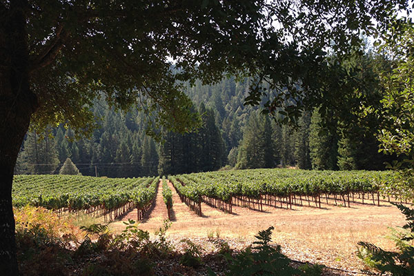 Nash Mill Vineyard,  Mendocino Ridge