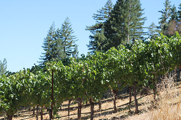 Wentzel Vineyard,  Anderson Valley