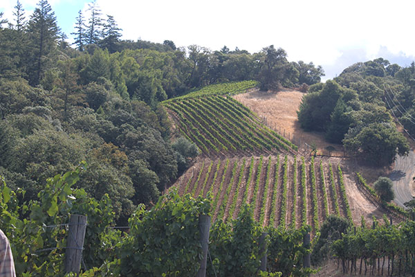 Deer Meadows Vineyard,  Anderson Valley