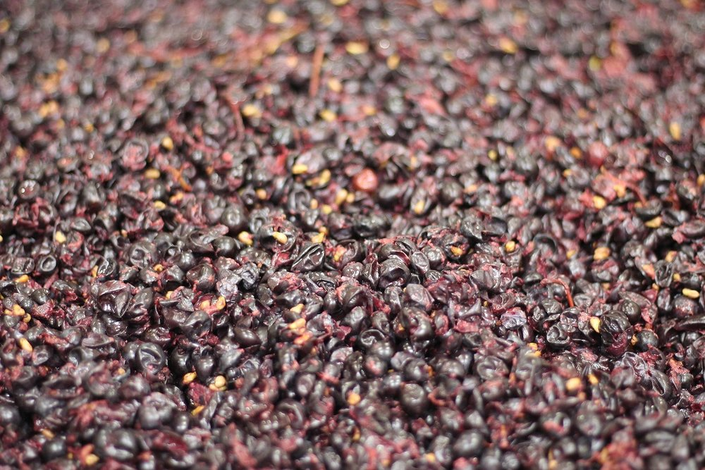 Skins, seeds, and stems atop fermenting Mariah pinot noir grapes. Photo: Waits-Mast