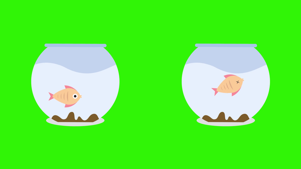videoblocks-cartoon-fish-bowls-with-dead-fish-and-live-fish_hsvvesnog_thumbnail-full01.png