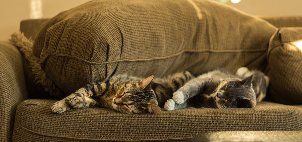 These are not our cats.  Photo by  Aleesha Wood  on  Unsplash