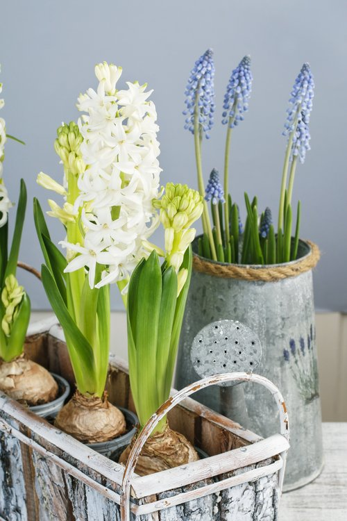 ADD A SPRING TOUCH TO YOUR HOME