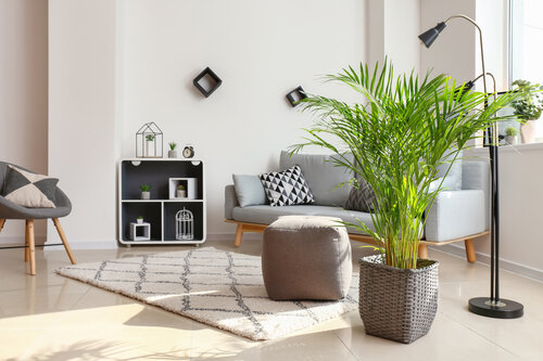 THE BEST INDOOR TREES FOR YOUR HOME