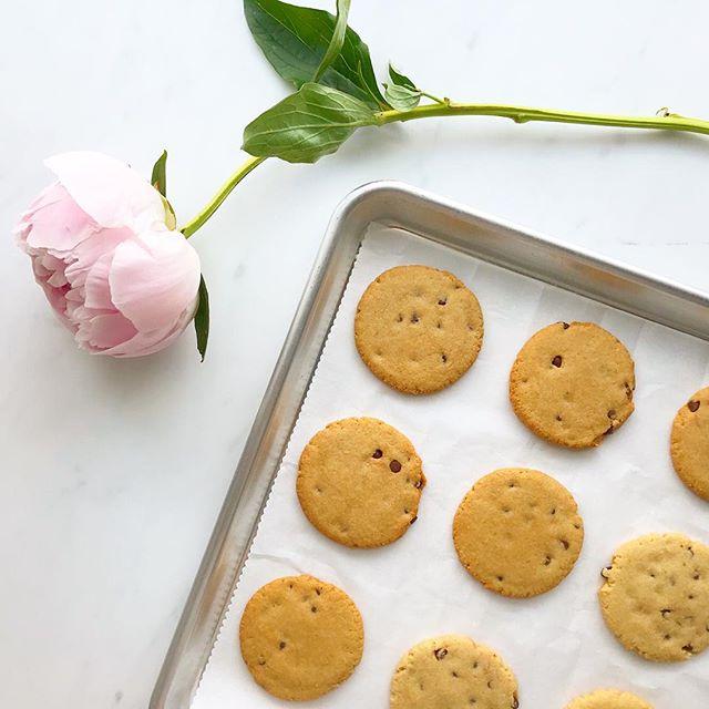 Happy first day of Spring! Anyone else eagerly awaiting peony season? Until then, cookies will do. 🍪 ⠀⠀⠀⠀⠀⠀⠀⠀⠀ ⠀⠀⠀⠀⠀⠀⠀⠀⠀ ⠀⠀⠀⠀⠀⠀⠀⠀⠀ #paleo #cookies #chocolatechip #chocolatechipcookies #dessert #grainfree #glutenfree #refinedsugarfree #dairyfree #lowcarb #antiinflammatory #vegan #plantbased #glutenfreevegan #paleobakery #desserts #cookiemonster #glutenfreebakery #bayarea #newyorkcity #sanfrancisco #peony #peonies #spring #healthy #celiac #lowcarb #keto #ketofriendly #cleaneating