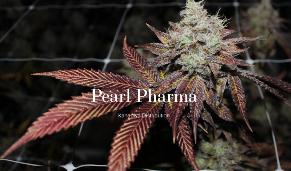 Pearl Pharma.png