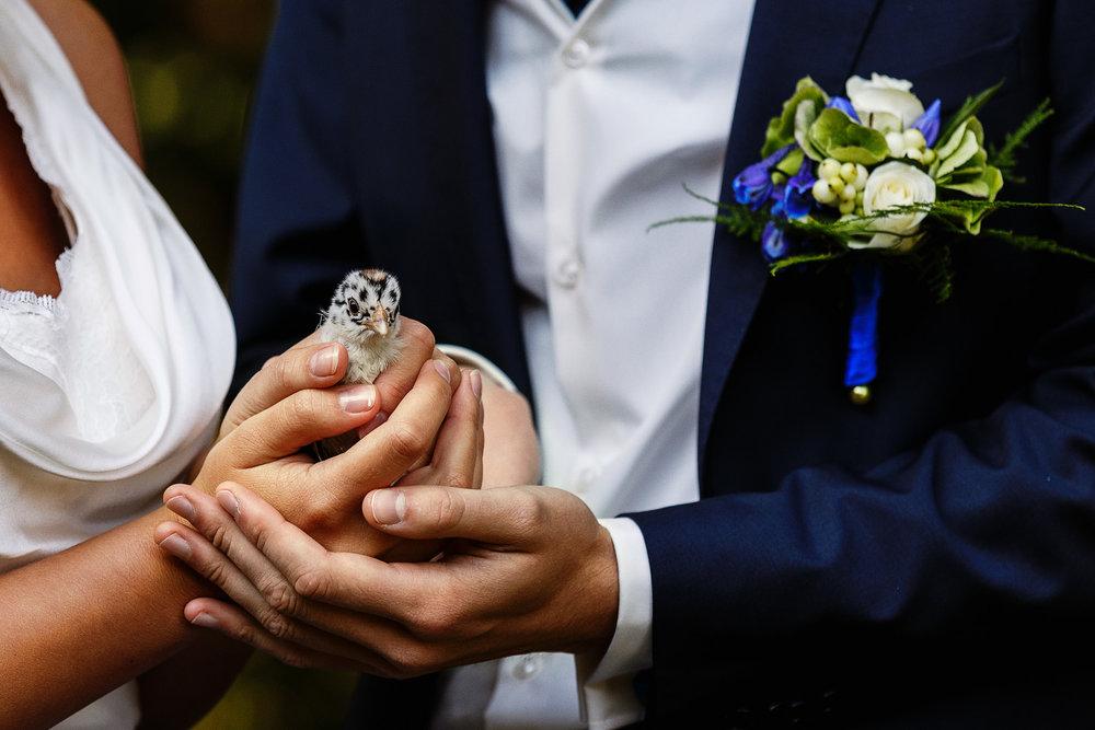 Bruid, het is jouw dag! - Vroege vogels actie