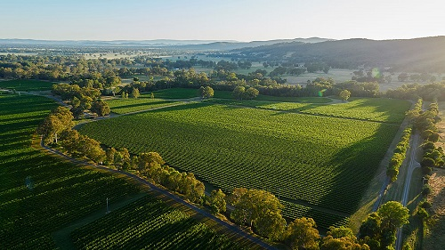 De Bortoli's King Valley Vineyards
