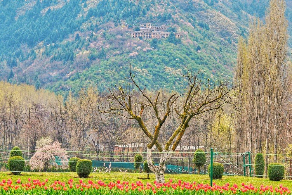 Kashmir -
